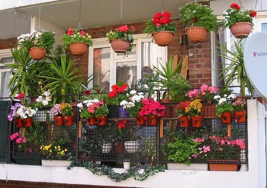 все комнатные цветы и названия фото